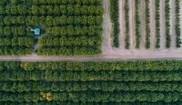 Tarım Sigortaları Havuzu'ndan 1,3 milyar TL hasar ödemesi