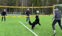 Norveçli voleybolcu, köpeğiyle antrenman yaptı