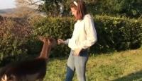 İtalyan ailenin yeni üyesi kendini köpek sanan geyik