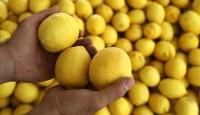 Limon ihracatına kısıtlama