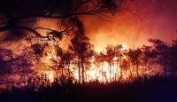 Muğla'da bu yıl 33 orman yangını meydana geldi