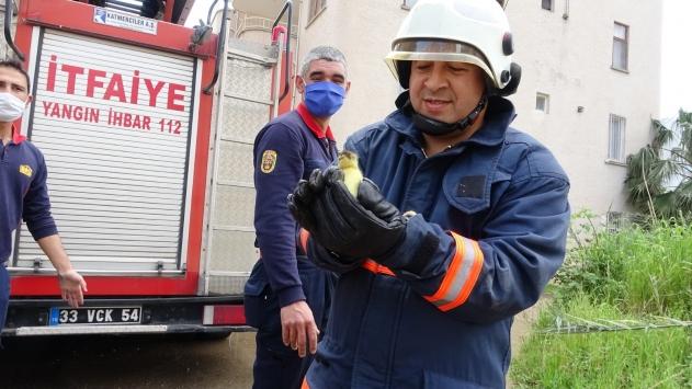 Mersinde boş evin balkonunda mahsur kalan ördek ve 6 yavrusu kurtarıldı