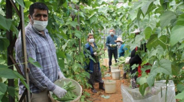 Antalyada sebze ve meyve üreticileri yoğun mesaisini sürdürüyor