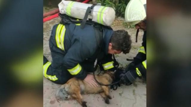Yangın çıkan evdeki köpeklere kalp masajı