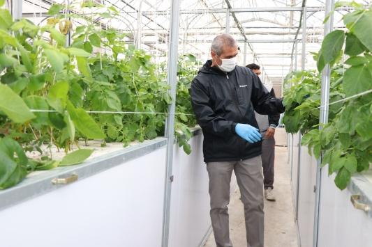 Topraksız tarımla patatesin toprak altındaki unsurlarının genetiği çıkartılıyor