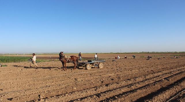 Kısıtlamadan muaf tutulan çiftçiler tarlanın yolunu tuttu