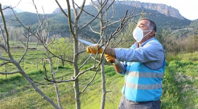 Vefa Grubu üyeleri Hüseyin amcanın zeytin ağaçlarını budadı