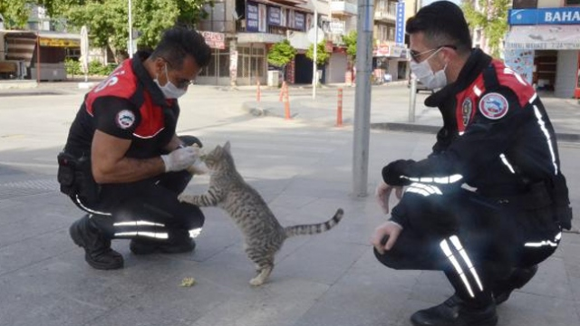 Sokakta yiyecek arayan kediyi yunus ekibi besledi