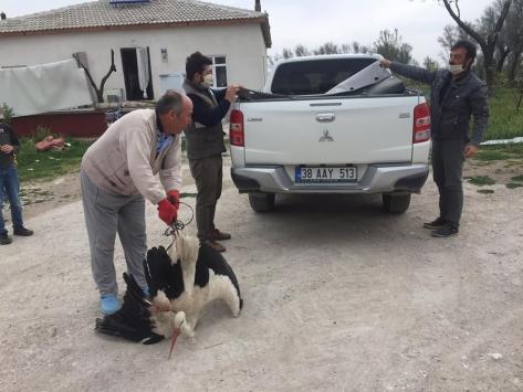Evinin bahçesinde bulduğu yaralı leyleği yetkililere teslim etti
