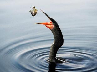 Kuşlar Aleminden -2-