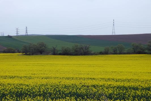 """Trakyada """"sarı bahar"""""""