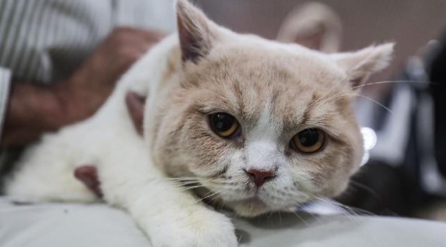 ABDde ev kedilerine koronavirüs bulaştı