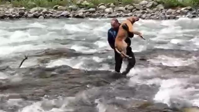 Derede taşın üstünde mahsur kalan köpek kurtarıldı
