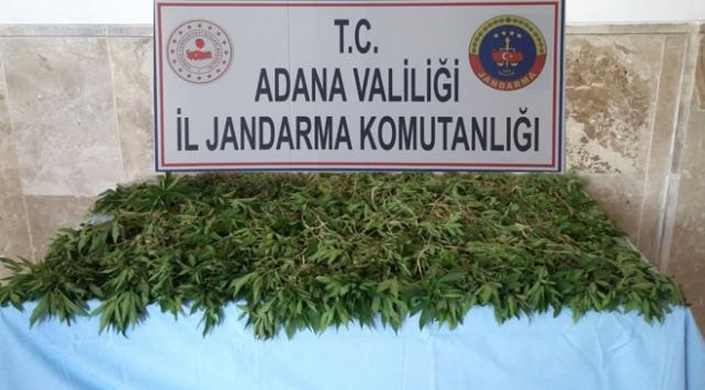 Adanada zehir tacirlerine operasyon