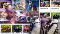 Hayvanat bahçeleri ve akvaryumlara dijital gezi