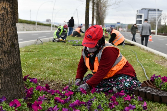 Ankaranın yeşil alanları 24 milyon çiçekle buluşuyor