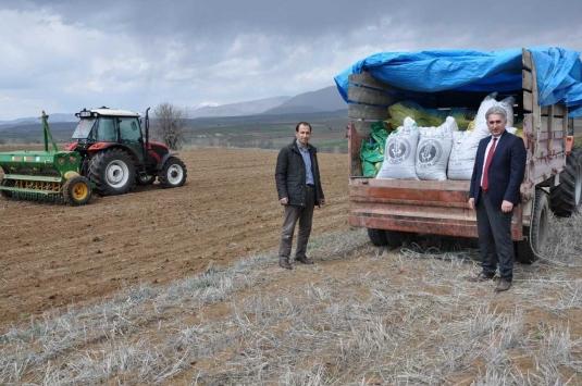 Gümüşhanede üreticilere 160 ton yem bitkisi tohumu dağıtıldı