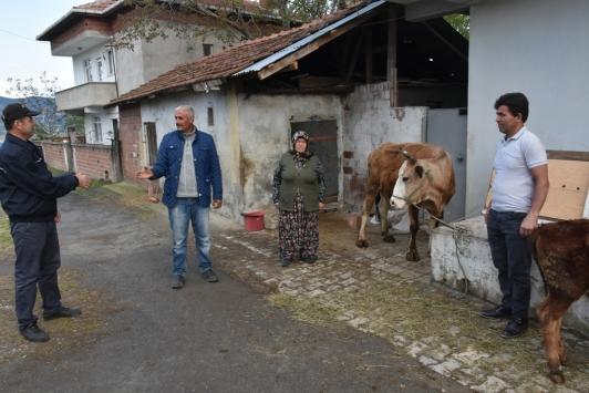 Sinopta bir kadın ineğini Milli Dayanışma Kampanyasına bağışladı