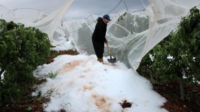 Mersin'de dolu tarım alanlarına zarar verdi