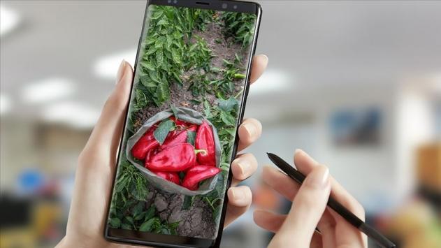 Dijital Tarım Pazarı üretime teşvik edecek