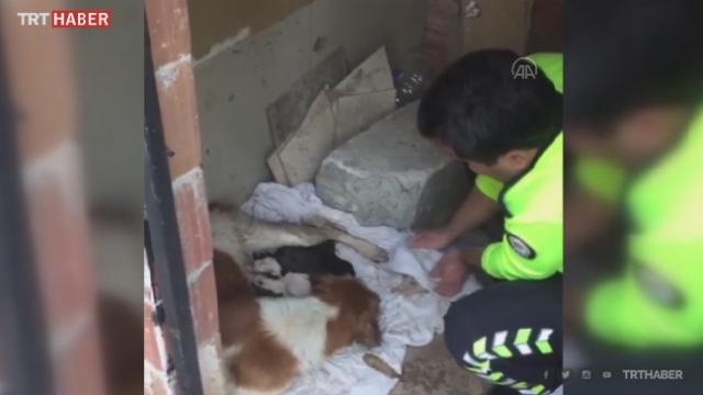Yağmurda ıslanan köpek ve yavrularına polis şefkati