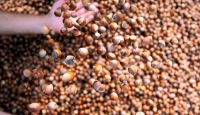Salgın fındığı teğet geçti ihracatta hedef yükseldi