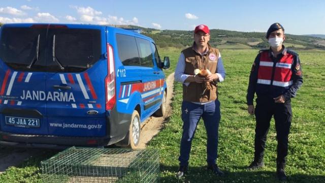 Yaralı angut tedavi edilerek doğaya salındı