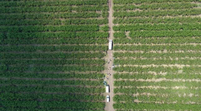 Koronavirüs sonrası stratejik sektörler: Tarım ve gıda