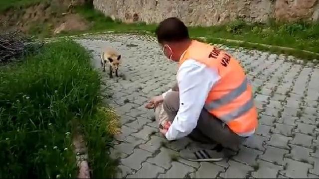 Vefalı eller bu kez Tunceli'de yavru tilkiyi besledi
