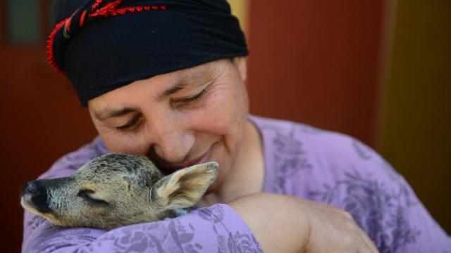 Yavru karacaları şefkatiyle büyütüyor
