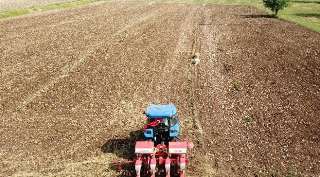 Yerli mısır tohumu yeniden toprakla buluştu