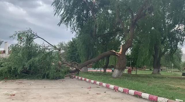 Fırtına çatıları uçurdu, ağaçları ve direkleri devirdi