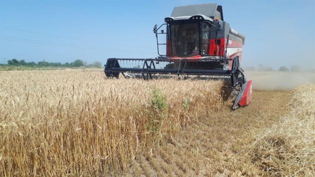 Adanada buğday hasadı başladı