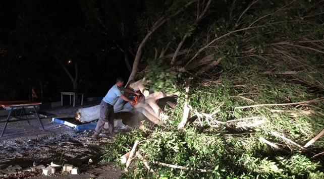 Antalyada fırtına: Ağaçlar kökünden söküldü, elektrik direkleri devrildi