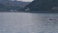 İstanbul'da denizin tadını yunuslar çıkarıyor