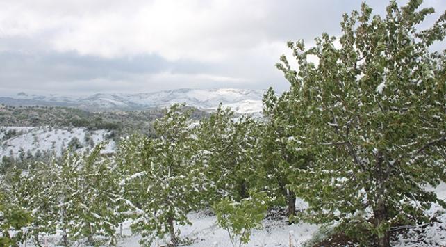 Konyada kar yağdı, kiraz ağaçları zarar gördü
