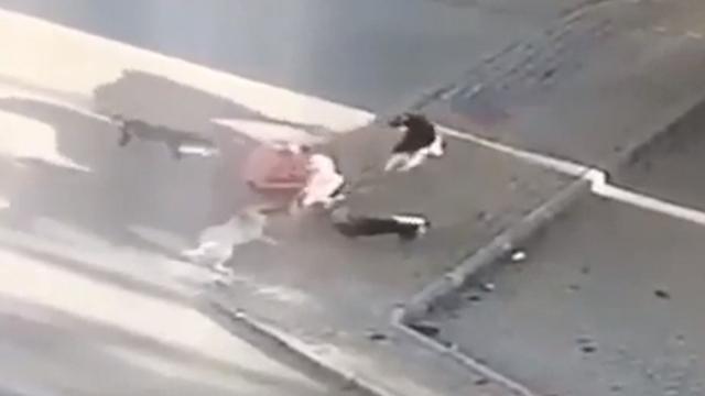 Genç kadının sokak köpekleriyle mücadelesi kameraya yansıdı