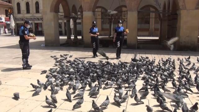 Aç kalan güvercinleri polisler besledi