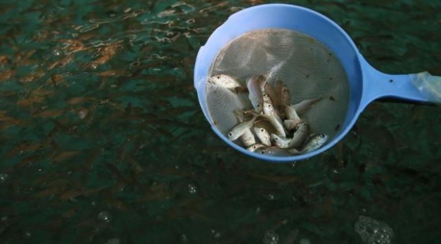 Trabzonun su ürünleri ihracatı katlandı