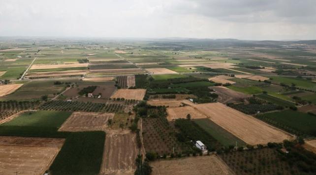 Söke Ovasında buğday ekim alanı iki katına çıktı
