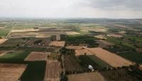 Söke Ovası'nda buğday ekim alanı iki katına çıktı