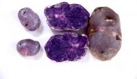 Yerli ve milli patates tohumları laboratuvarda üretiliyor