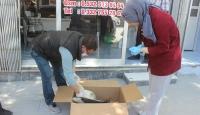 Karapınar'da yaralı halde bulunan leylek tedavi altına alındı