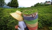 Türk çayı ihracatı ilk 4 ayda yüzde 53 arttı