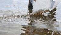 70 bin yavru sazan İznik Gölü'ne bırakıldı