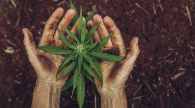TÜBİTAKtan kenevir bitkisinin yakıta dönüştürülmesi projesine destek