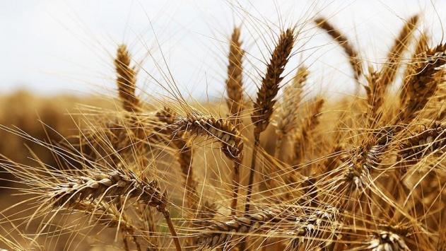 Nisanda gıda ve tarım ürünleri ithalatındaki artış hız kesti