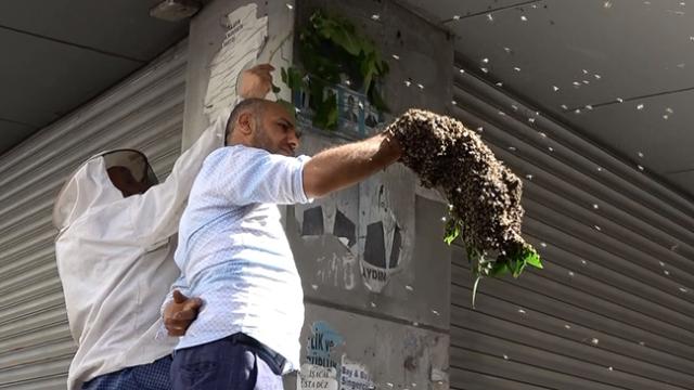 Oğul veren binlerce arıyı çıplak elle topladı