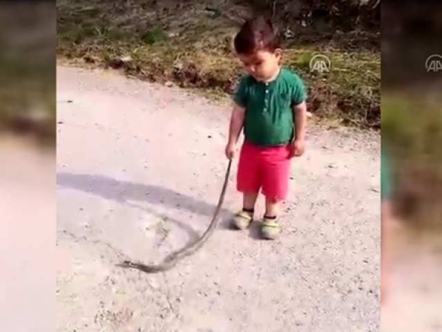 Küçük Eymenin 1,5 metrelik yılanla tehlikeli oyunu