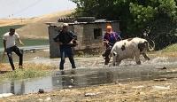 Baraj suyu yükseldi, hayvanlar mahsur haldı
